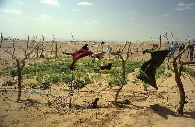 Orticello dei Tuareg