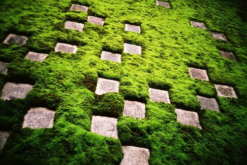 moss checkers