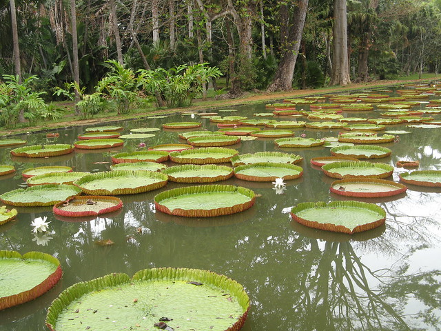 Ssr botanical garden mauritius flickr photo sharing for L oreal jardin pamplemousse