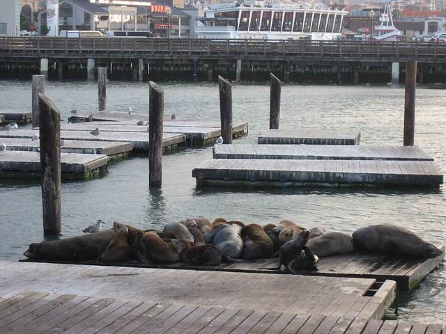 Leones Marinos en Pier 39