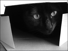 Inside box by May Saiury