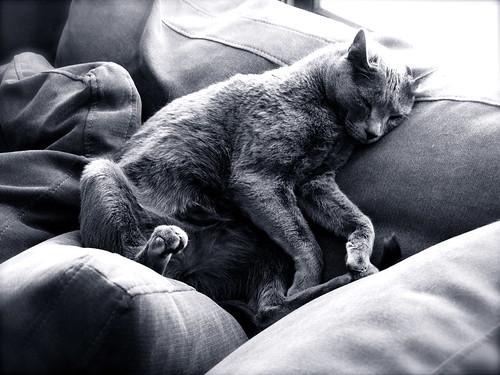 cats sleep a billion hours a day