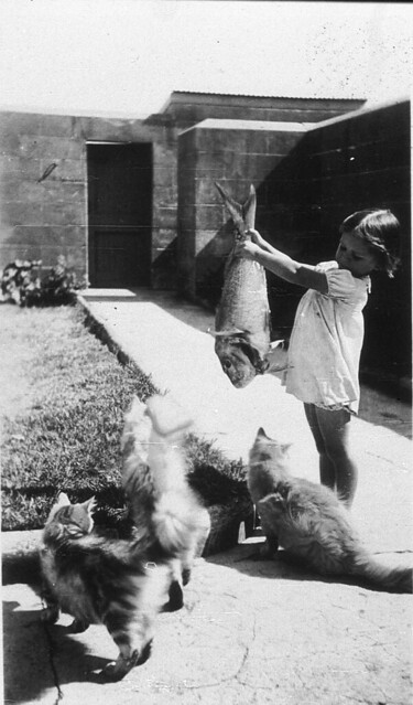 Cats' food didn't come out of a can and it was nothing but the best fish - Pt Perpendicular, c 1936 / by Mrs Tulk