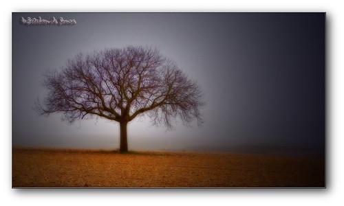 Soledad / solitude.