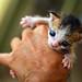 Help me name my kitten : )
