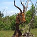 Chobe National Park #2