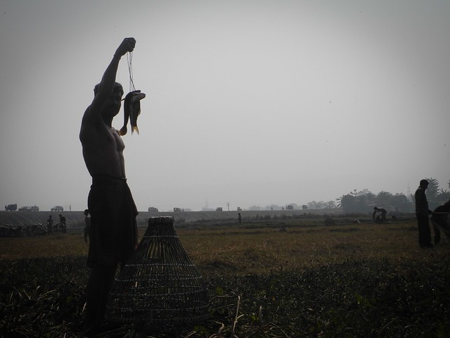 A fisherman shows his catch before leaving the beel