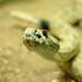 Rattlesnake Museum (Albuquerque, NM)