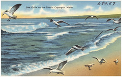 Sea Gulls on the beach, Ogunquit, Maine