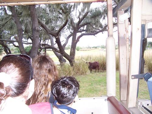 Visit to Walt Disney World's Animal Kingdom
