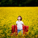 Happiness Is A Field Of Flowers by Lisa Røstøen  |  Fotografix Studios