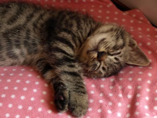 猫の寝てるところ。