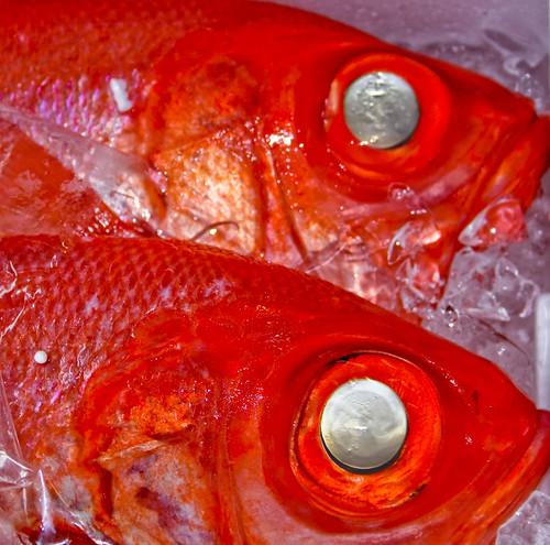 Red Fish Tsukiji Fish Market Tokyo by hitthatswitch