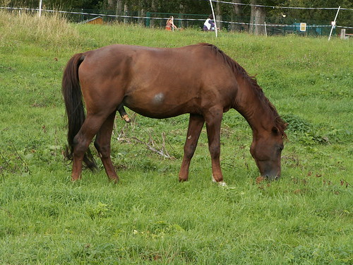 pferd-elbwiese-092