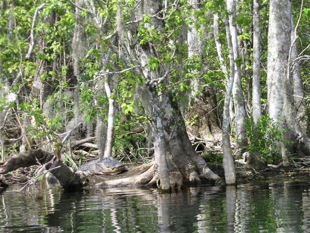 Alligator Park, Florida