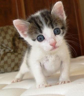 Adopci n de gatos centro de gatos del mas ram p gina 2 - Gatitos de un mes ...