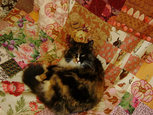 Lucy on quilt
