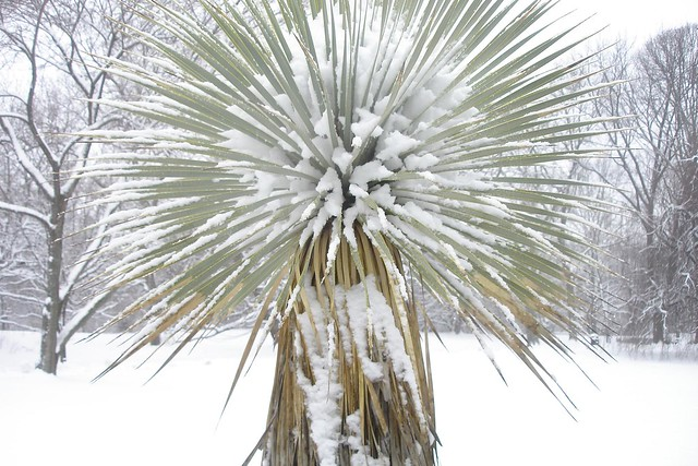 Snow in the Monocot Border. Photo by Dave Allen.