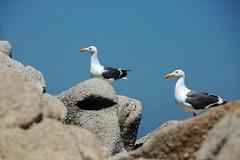Gulls on Rocks