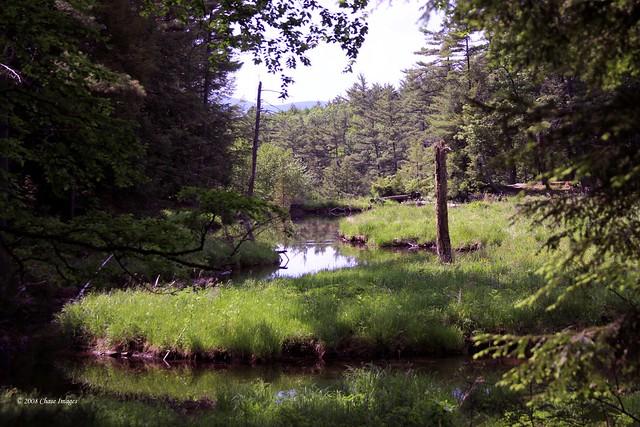 Shelving Brook