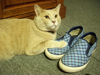 Milo loves my shoes too!