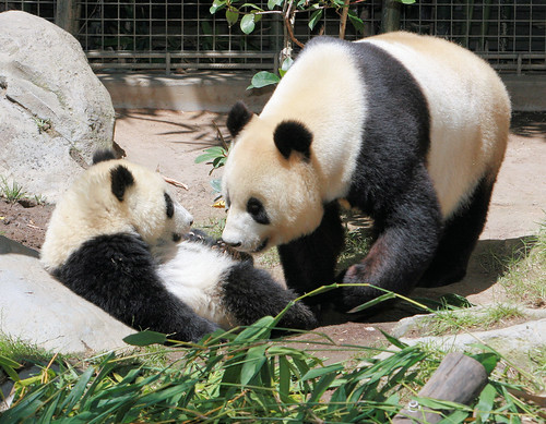 Baby Zhen Zhen face to face with her mom