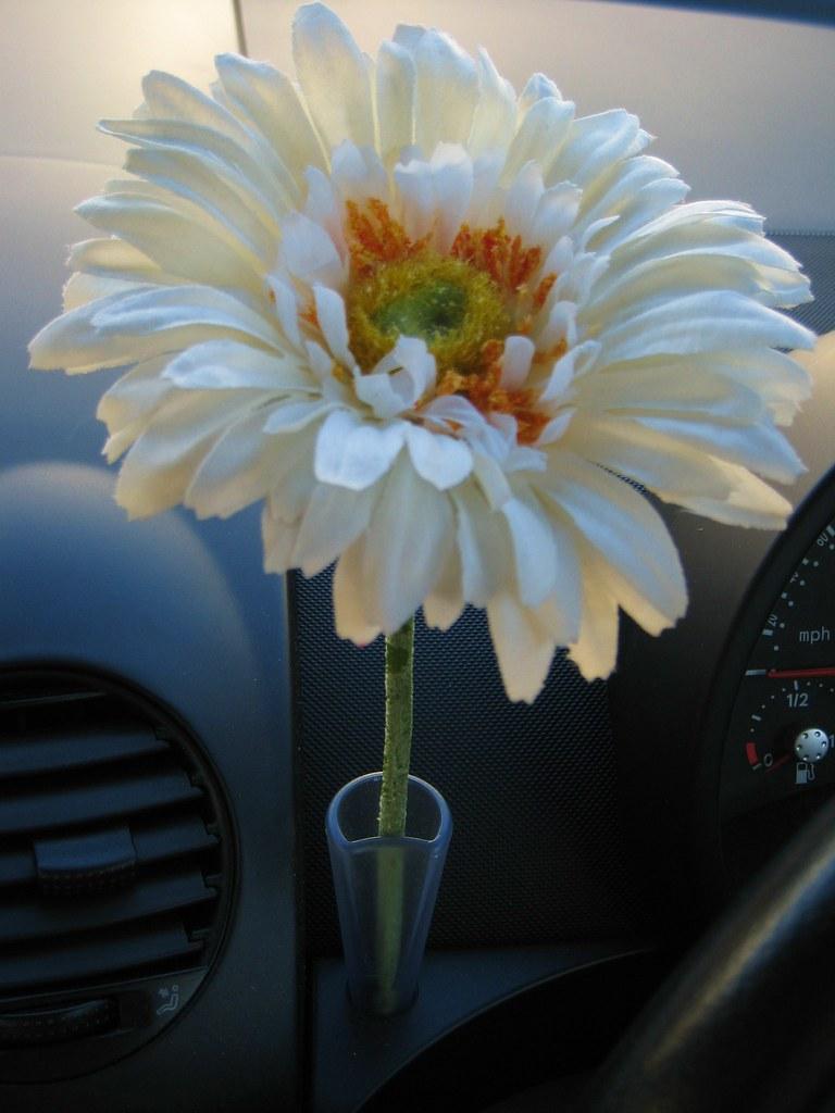 Daisy in the flower vase & VOLKSWAGEN BEETLE FLOWER VASE. VOLKSWAGEN BEETLE