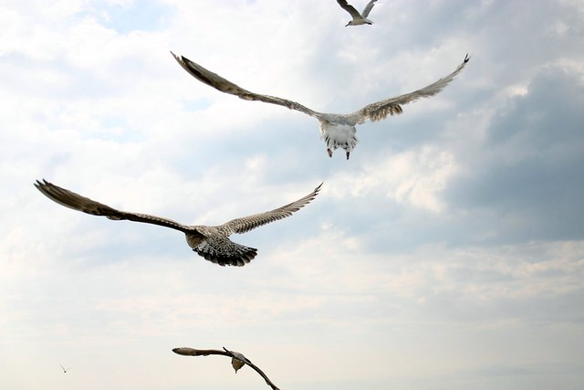 Flight of the seagull II