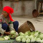 Hani Woman Vendor with Cabbages - Yuanyang, China