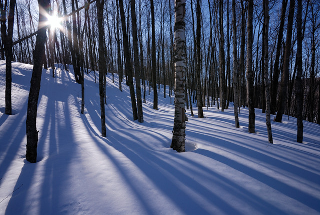 Trees, Snow and Sun