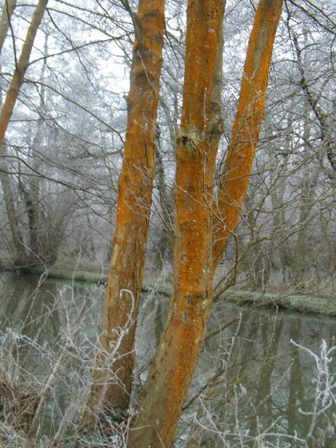Weyside trees