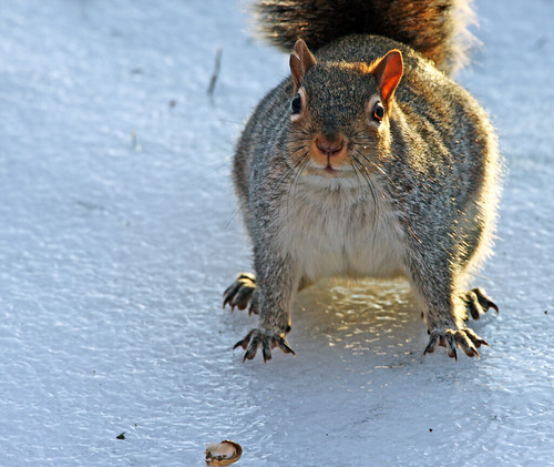 """Hey, it's cold and slippery out here! Throw me a nut!"""