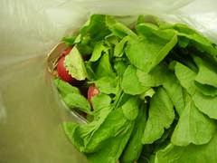 vegetable(1.0), leaf vegetable(1.0), herb(1.0), produce(1.0), food(1.0), basil(1.0),