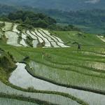 Dusk in Yuanyang Rice Fields - Yunnan, China
