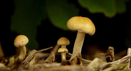 Little Shrooms