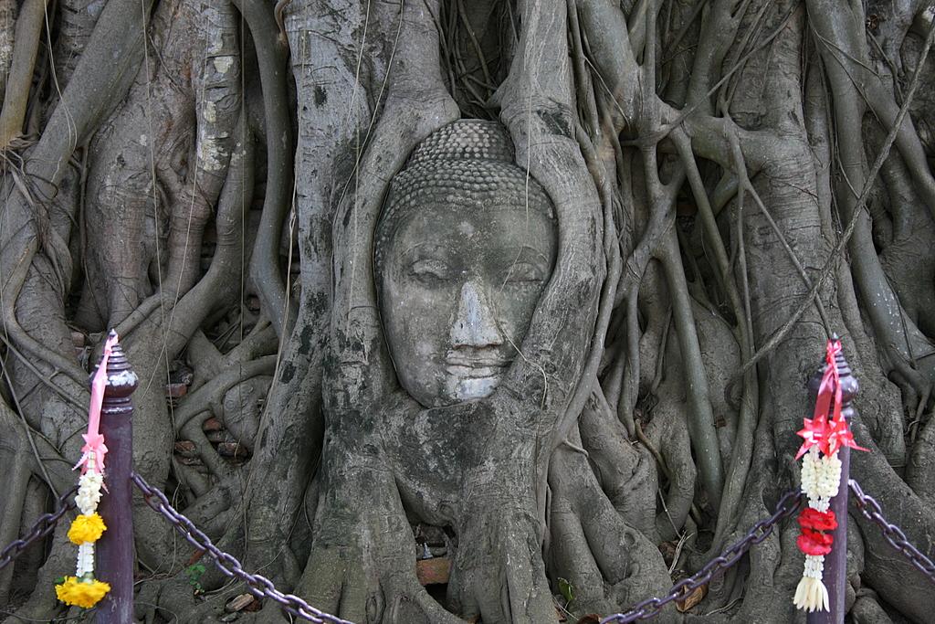 Buddha entwined