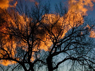 Orange Sunset behind Winter Branches