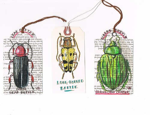 shipping tag beetles