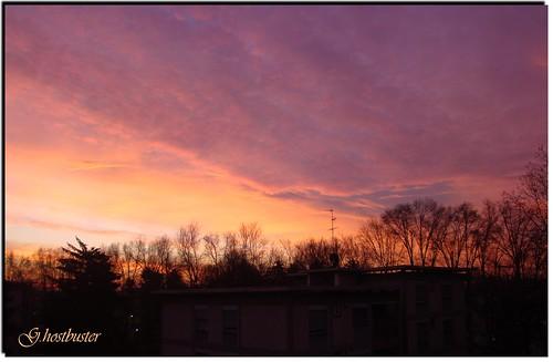 pink trees red sky milan alberi backlight sunrise alba milano rosa cielo rosso visualart controluce ghostbuster overtheexcellence dazzlingshots goldstaraward gigi49