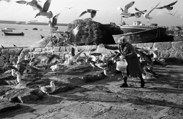Feading Seagulls