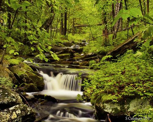 ny newyork waterfall woods stream catskills sullivancounty