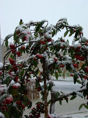 Light snow in Ballyroan