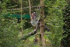 woodland, trail, rainforest, tree, canopy walkway, green, forest, natural environment, jungle,