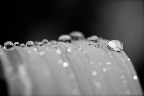 Rain2008_5