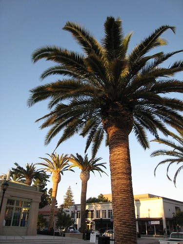 redwood city, king palms IMG_5860
