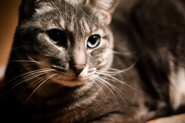 Le roi chat