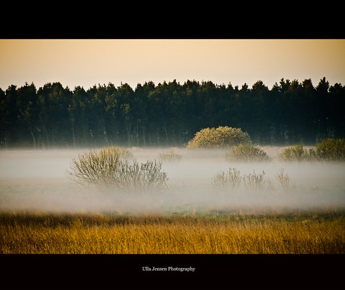 morning trees mist nature sunrise landscape denmark gold bush fairies elves