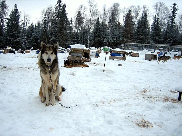 Jasper Place Dog Friendly Apartments Edmonton