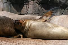 Seals at Aalborg Zoo