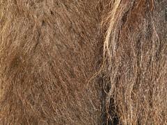 fur, hay, brown, close-up,